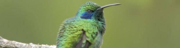 Hummingbird impact référencement longue traîne