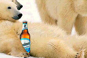Pub Quilmes ours polaires